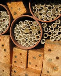 Make A Bee Hotel The Pollinator Garden