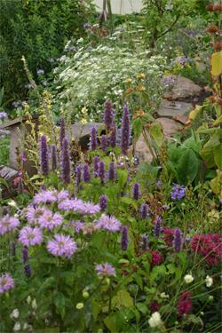 A Pollinator border