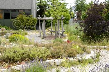Ordinaire The Pollinator Garden